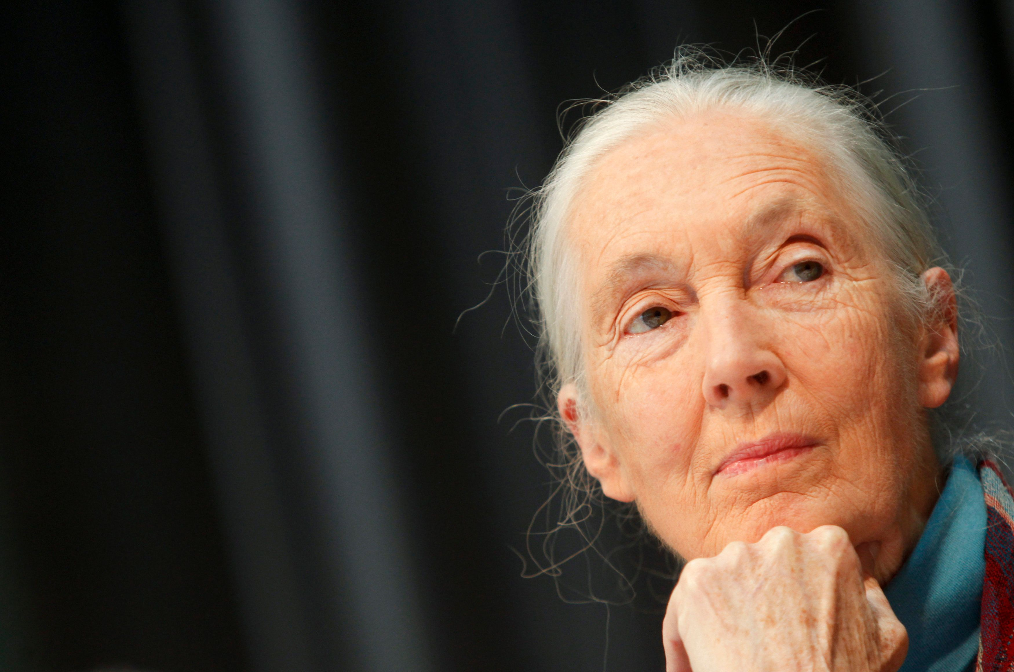 Jane Goodall Says Trump's Efforts To Derail Climate Action Are 'Immensely