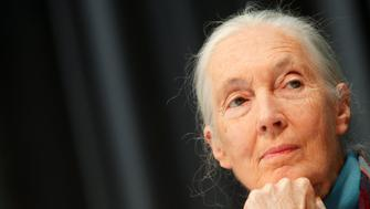 British primatologist, ethologist and anthropologist Jane Goodall listens to a journalist's question during a news conference at Vienna's Schoenbrunn Zoo June 18, 2010.  REUTERS/Herwig Prammer (AUSTRIA - Tags: SOCIETY HEADSHOT)