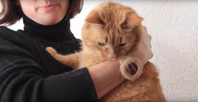 This Watch Is Made Out Of Your Pet's Fur, So Excuse Us While We