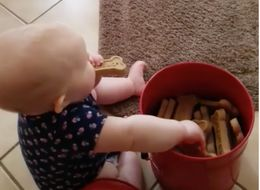 Baby Torments Family Dogs By Eating All Their Biscuits In Front Of Them