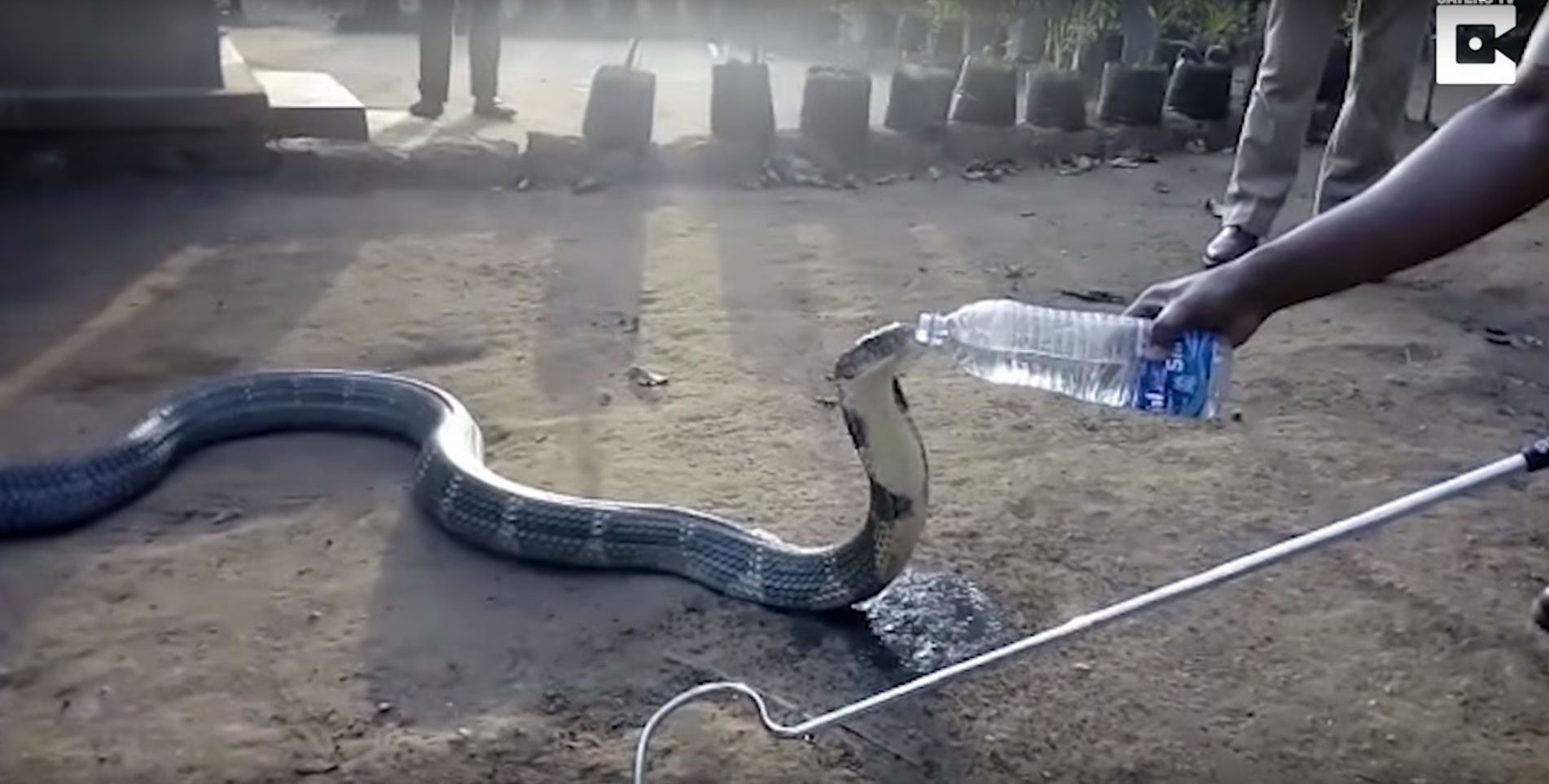 Video captured a king cobra appearing to drink from a water bottle amid extreme droughts in Southern India.