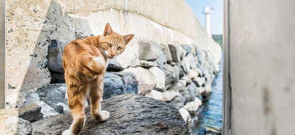Powerful Photos Reveal The Complex Truth About An Island Ruled By Cats