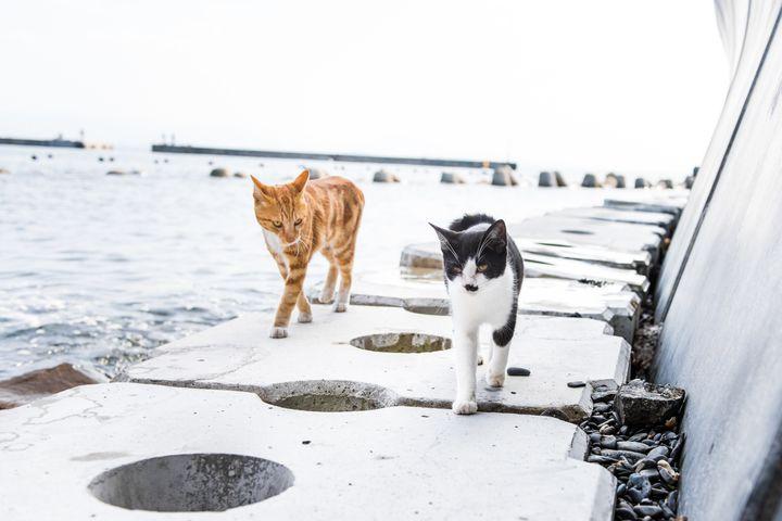 Two cats on Ainoshima.