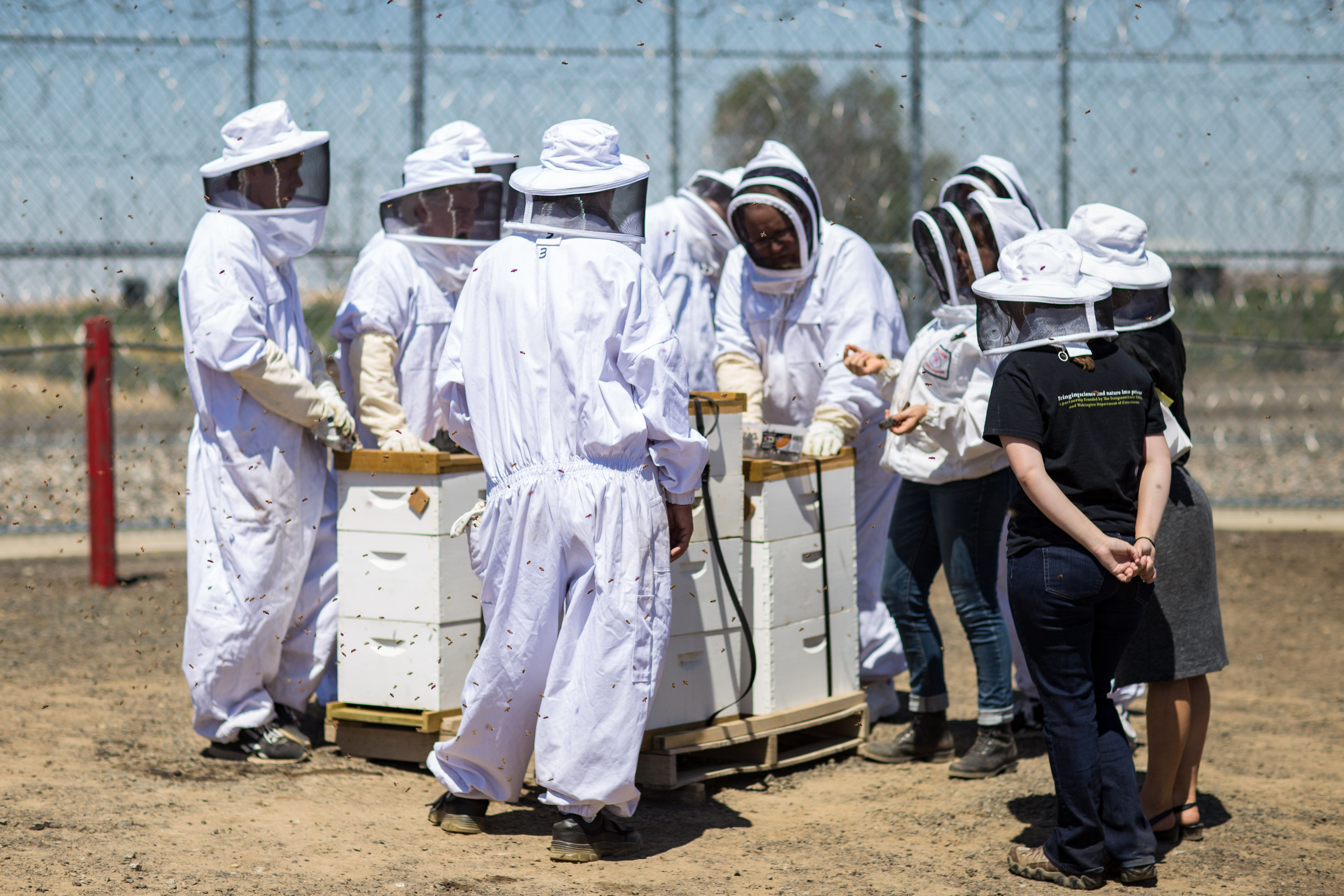 The Washington Department of Corrections has rolled out a robust beekeeping program in seven of its 12 state prisons. Here, 1