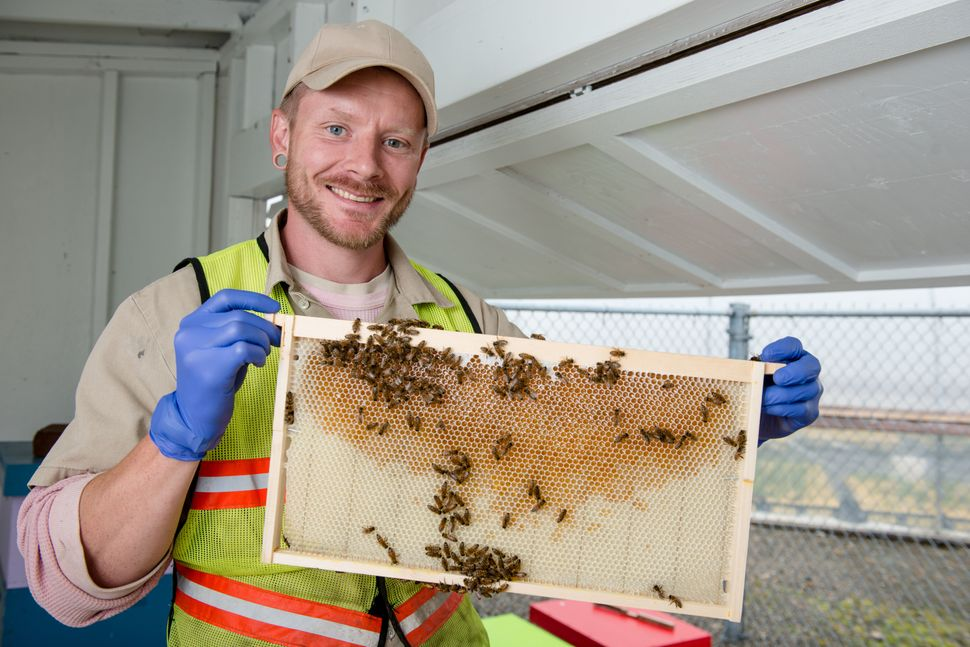 An incarcerated beekeeper at Stafford Creek Corrections Center in Aberdeen, Washington, checks honeybee frames.