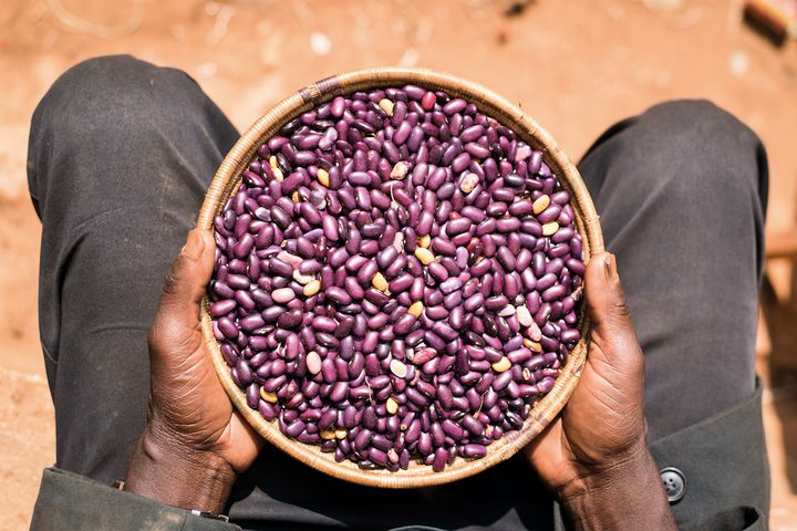 Smallholder farmer Michel Ntungwanimana holds a bowl of beans he harvested in Burundi.