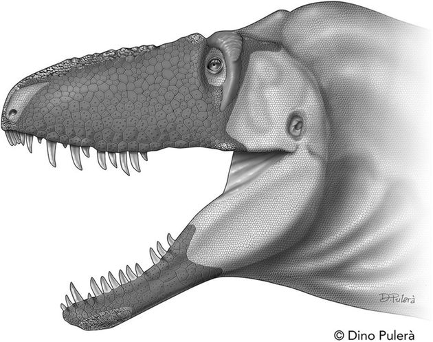 Tyrannosaurs Had A 'Sixth Sense' That Ensured They Were Always A Step Ahead Of Their