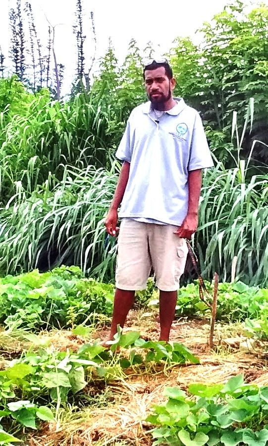Pakoa Leo standing where the cross breeding of sweet potato is taking place.
