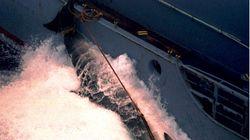 Japan Kills 333 Minke Whales In Annual Antarctic Hunt, Sparking