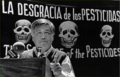 <p>Chavez giving a speech on banning pesticides because of the dangers they posed to grapeworkers and the community. </p>