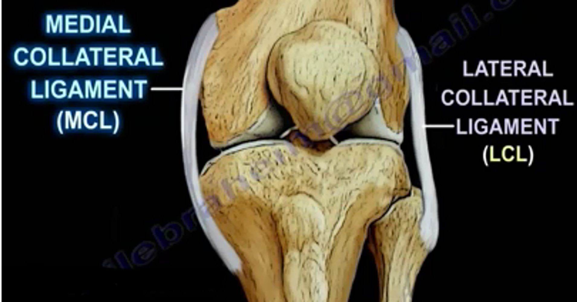 Medial Collateral Ligament Injuries Huffpost