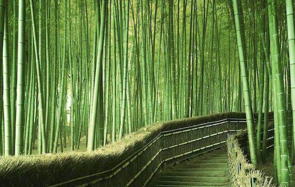<strong><em>Japan's Sagano Bamboo Forest</em></strong>