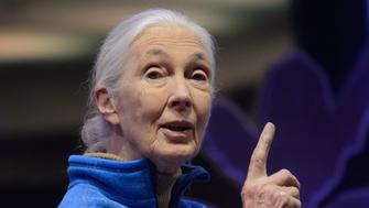 British primatologist and world renowned environmentalist Jane Goodall speaks at an event to promote her Roots and Shoots program in Hong Kong on November 10, 2016. Goodall said November 10 that those who care for the planet would have to work harder in response to Donald Trump's shock US presidential election victory. / AFP / Anthony WALLACE        (Photo credit should read ANTHONY WALLACE/AFP/Getty Images)