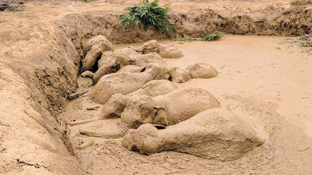 By the time people found the elephants, they had been stuck for at least a couple of
