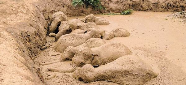 Community Rallies To Free Elephant Herd Trapped In Muddy Bomb Crater