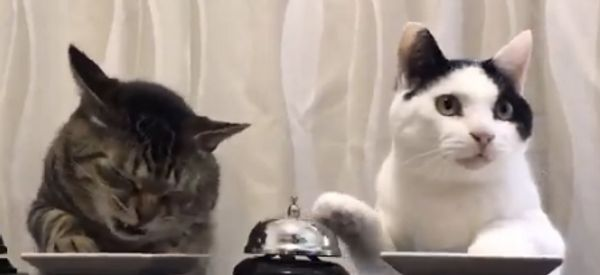 People Are In Love With This Video Of Cats Ringing Bells For Treats