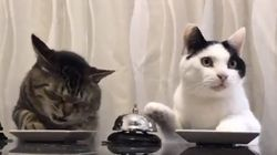 People Are In Love With This Video Of Cats Ringing Bells For