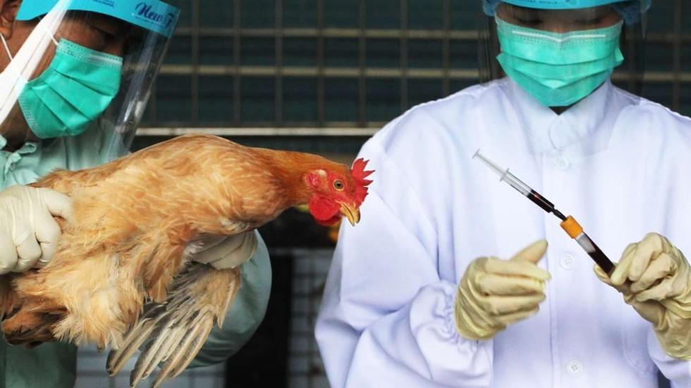 bird flu essay