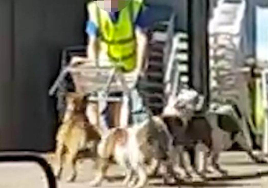 Police shot two dogs dead and their owner was arrested after the animals attacked shoppers in Bolton...