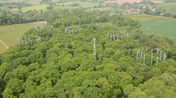 This Forest Is Being Pumped Full Of Carbon Dioxide To Mimic The Future Of Global Warming