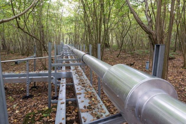 This Forest Is Being Pumped Full Of Carbon Dioxide To Mimic Future Global