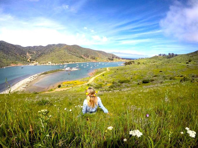 Wildflowers blooming all over Catalina Island!