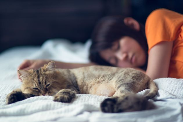 8 Reasons Why Cats Are Better Than
