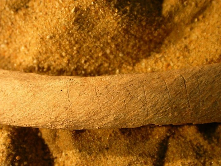 Many of the bones had deliberate knife marks on them