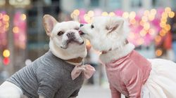 Two Pups Took Engagement Pics And The Cuteness Is Off The