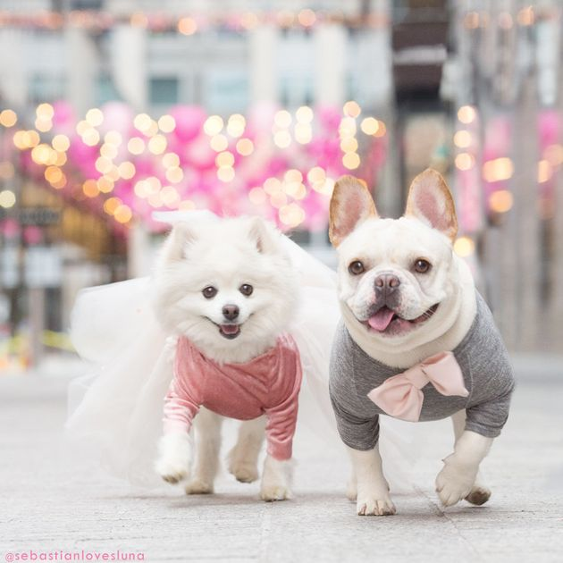 Luna (left) and Sebastian (right) are a fashion-forward pup