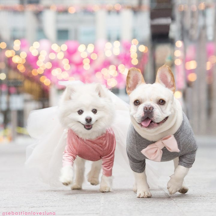 Luna (left) and Sebastian (right) are a fashion-forward pup couple.