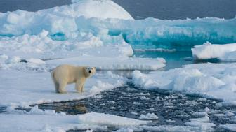 SVALBARD AND JAN MAYEN ISLANDS - 2015/07/20: A polar bear (Ursus maritimus) on the pack ice north of Svalbard, Norway. (Photo by Wolfgang Kaehler/LightRocket via Getty Images)