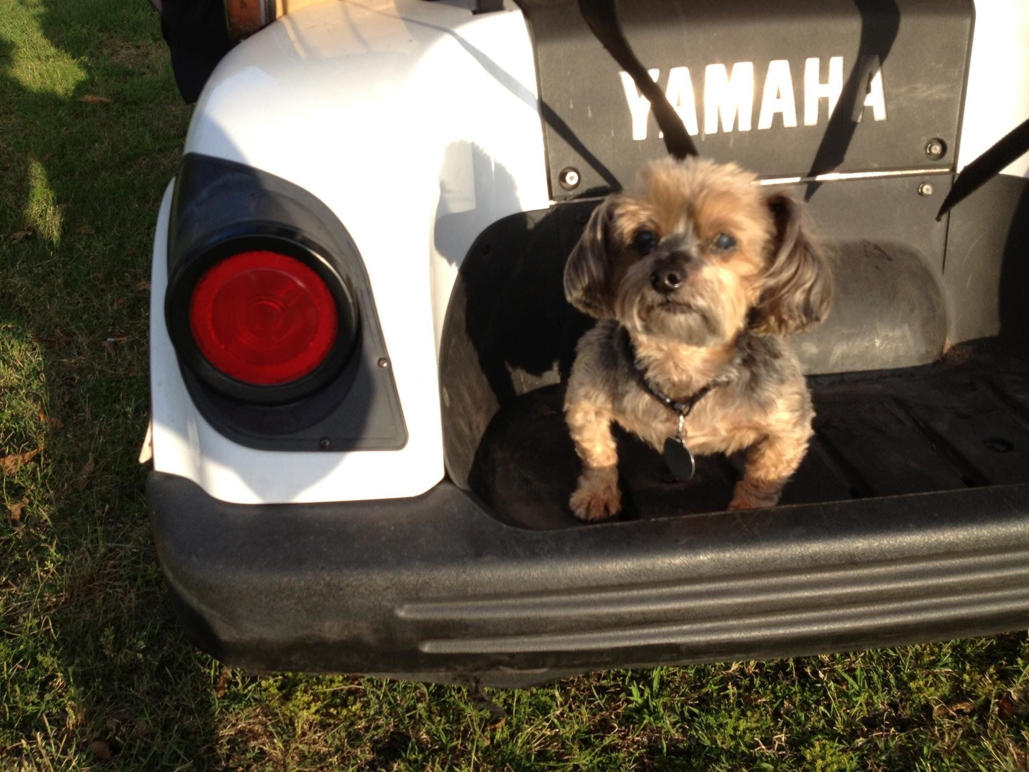 The author's dog, Sapp, who loved going for rides and running on golf courses.