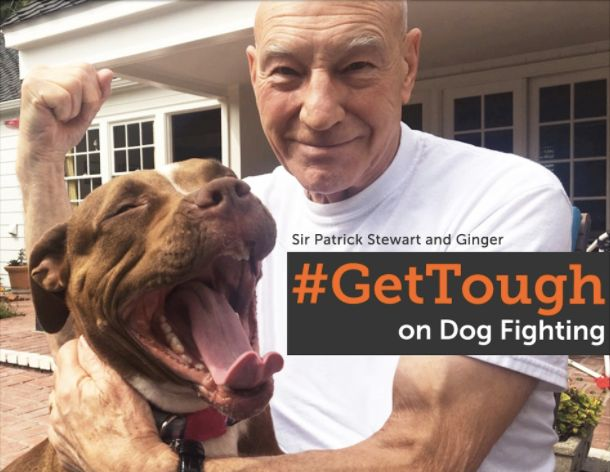Ginger's love has inspired Stewart to take action to help other dogs like her.