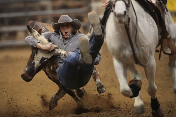 Chase Crain participates in the bull doggin competition at the Bill Pickett Invitational Rodeo on April 1, 2017, in Memphis,