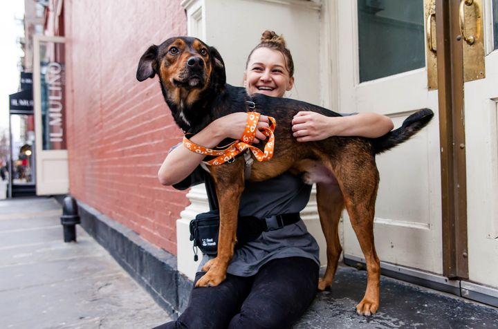 Milo, a lab and German shepherd mix up for adoption at Best Friends in NYC.