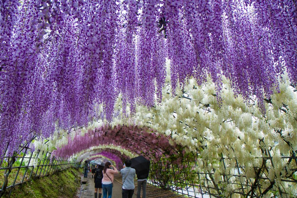 El jardín Kawachi
