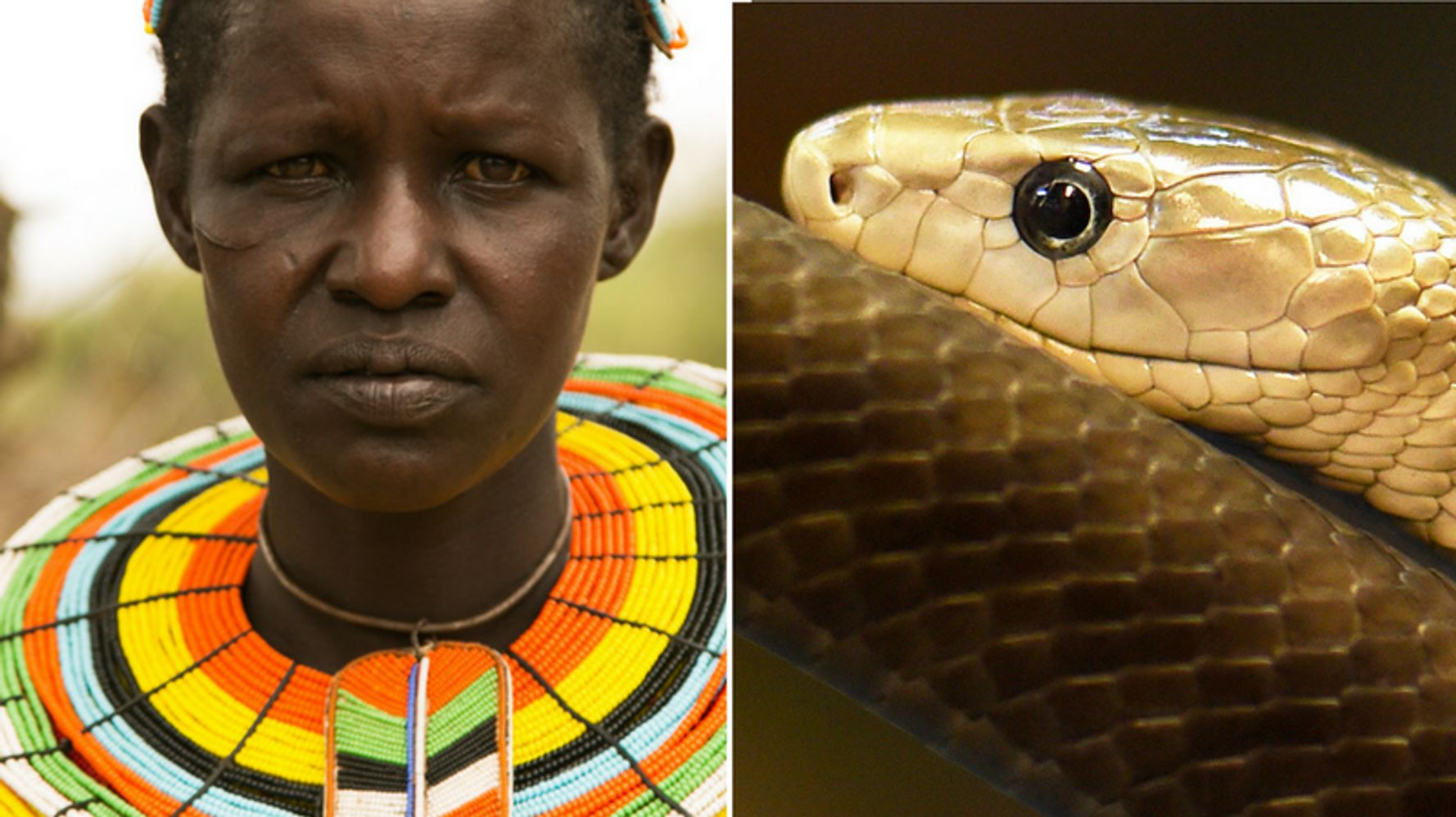 This Woman Survived One Of The Deadliest Snake Attacks