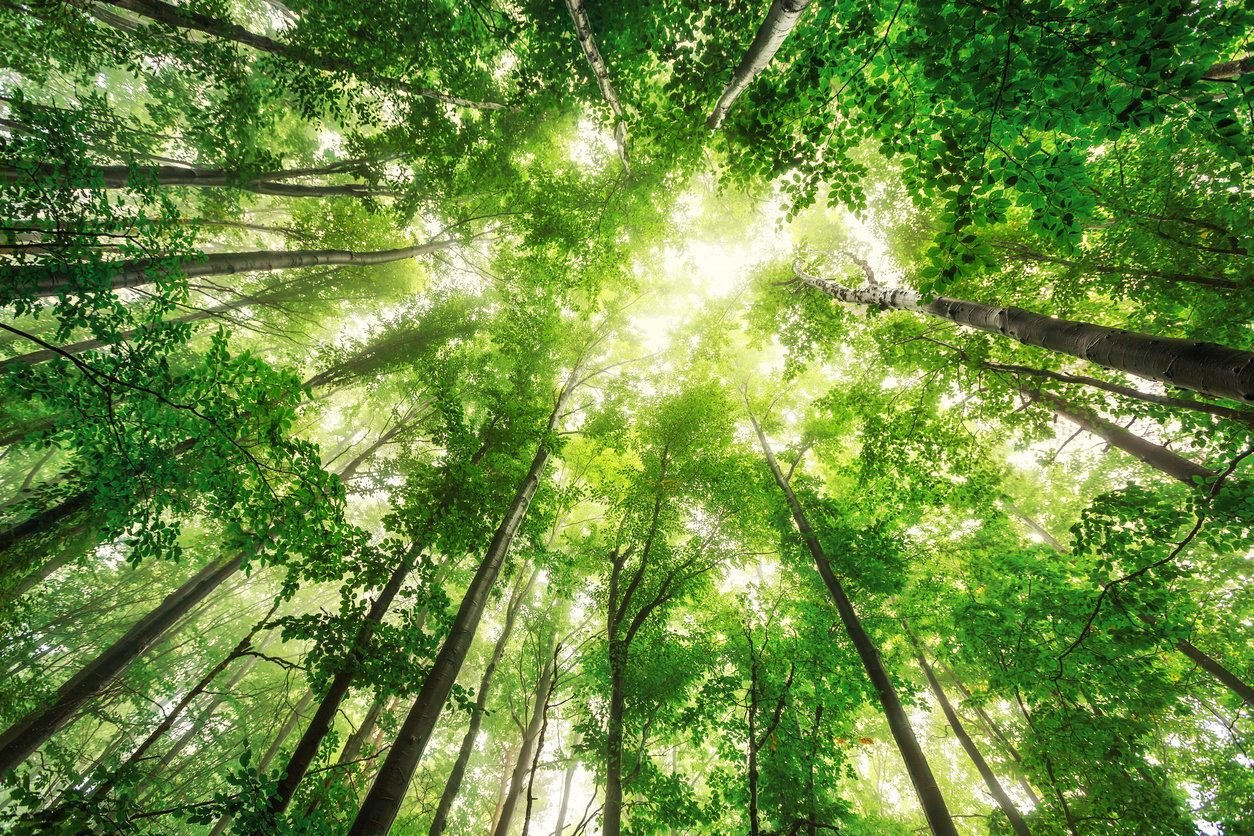 Botanic Gardens Conservation International unveiled the first-ever database of all the world's tree species this week.