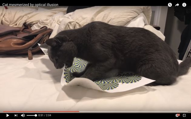 The cat resorted to biting and tearing the paper after watching the mind-bending