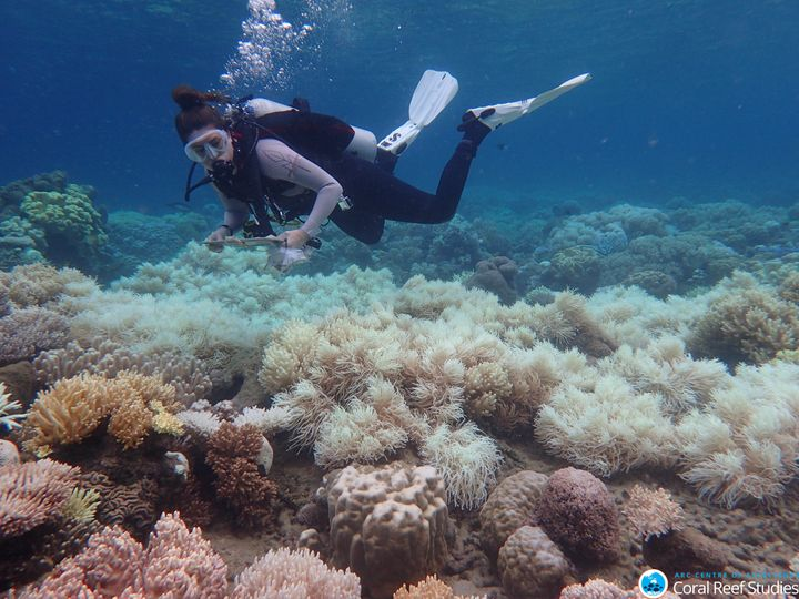 """A mass bleaching event <a href=""""https://www.huffpost.com/entry/great-barrier-reef-coral-bleaching-photos_n_56f9f1afe4b0143a9b491e6a"""" target=""""_blank"""" role=""""link"""" data-ylk=""""subsec:paragraph;g:dacafa6b-e55d-3e69-838b-2039508d018d;itc:0;cpos:__RAPID_INDEX__;pos:__RAPID_SUBINDEX__;elm:context_link"""">killed more than two-thirds</a> of parts of Australia's Great Barrier Reef."""