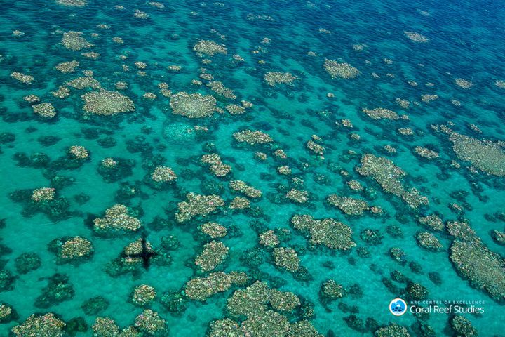 Aerial surveys revealed the middle third of the Great Barrier Reef is being hit by severe coral bleaching.
