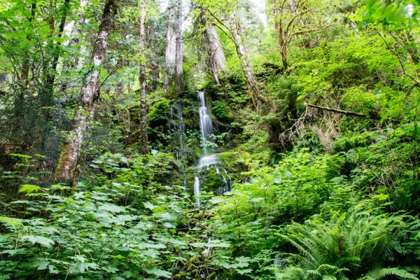"""An acoustic ecologist determined that the <a href=""""http://www.huffingtonpost.com/2015/01/25/quietest-place_n_6509890.html"""">qu"""