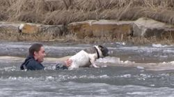 Man Takes Risky Plunge To Save His Dog From Icy Pond Because ...