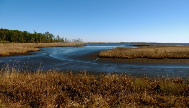 Blackwater Wildlife Refuge, Cambridge MD