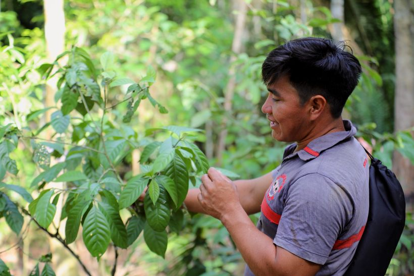 Edilino, teenage botanist-in-training
