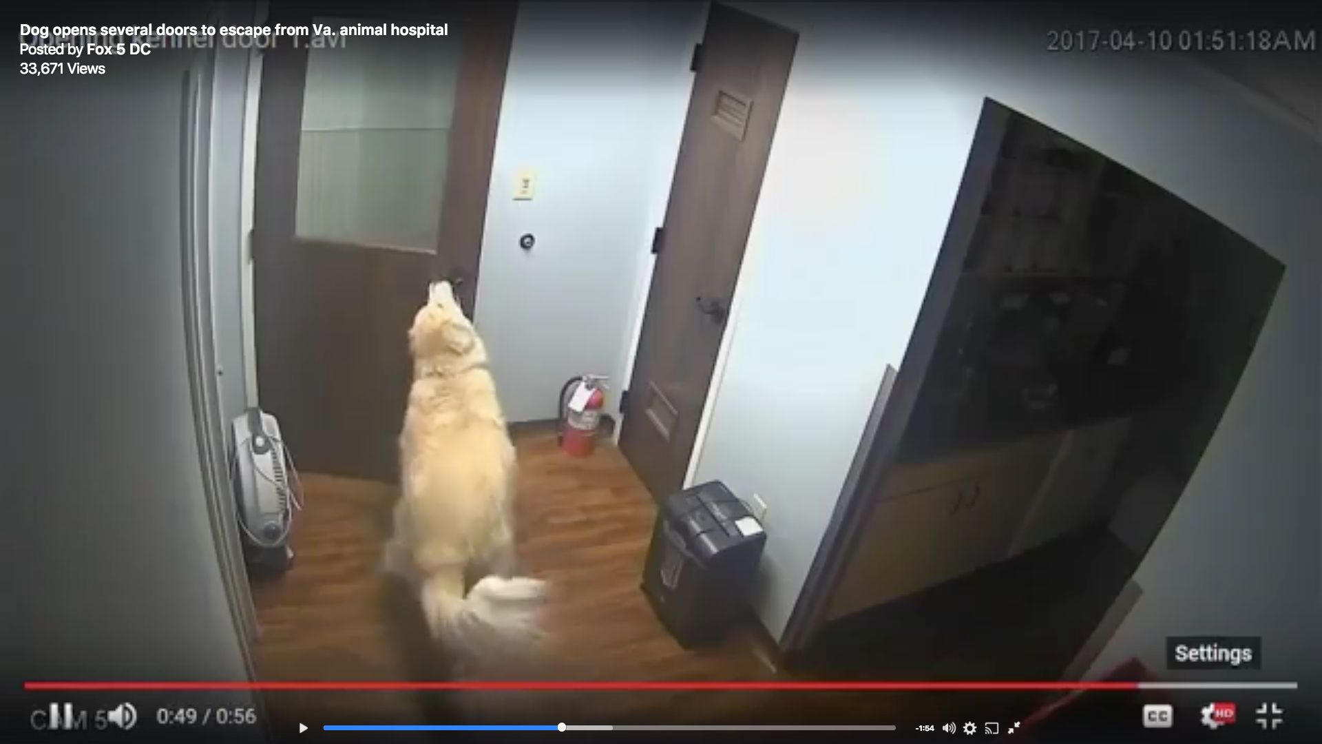 General the dog was filmed breaking out of the animal hospital with ease.