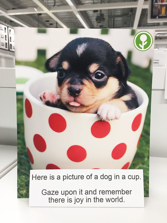 Puppies make everything better, even Ikea.