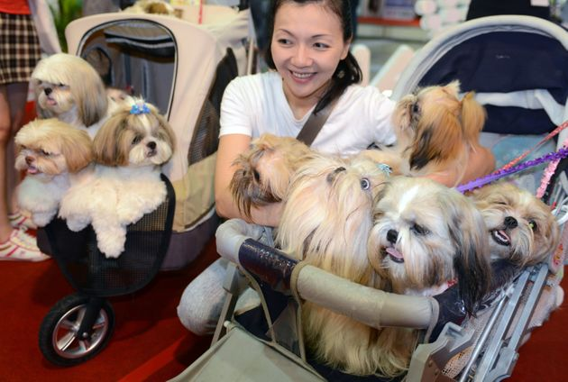 A woman poses for photos with her dogs during an annual pet show in