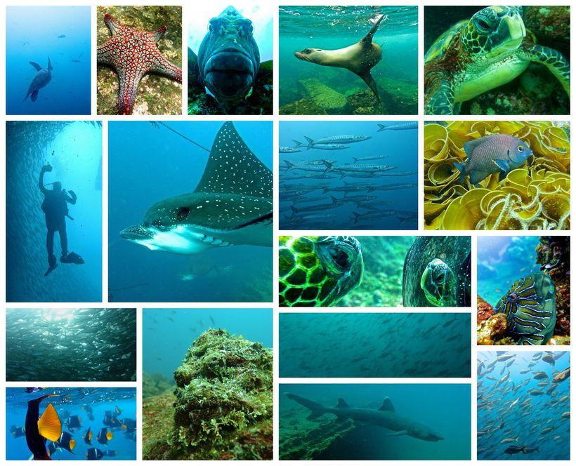 Diving Galapagos.
